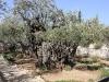 0450 Getsemani_1200x800
