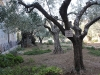 0451 Getsemani_1200x800
